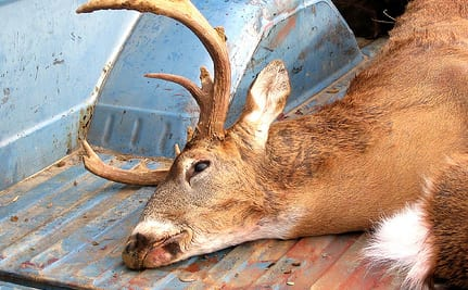 Killed needlessly for man's vanity or self-inflicted ignorance.