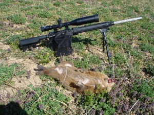groundhog-killed-huntingpictures254_zpsb348f786