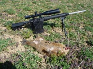 groundhog-killed-huntingpictures254_zpsb348f786