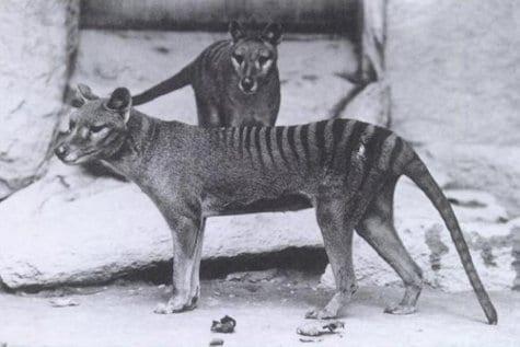 Animal-Extinction1