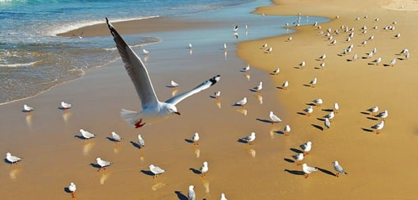 Seagull flying in the beach