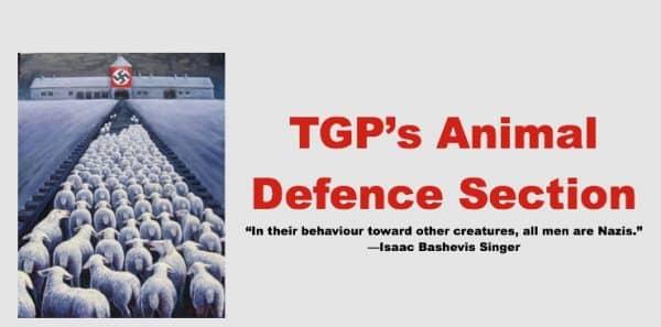 TGP-animals-section3