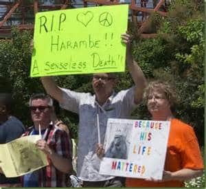 harambe-gorilla-defenders