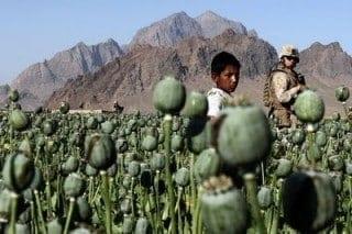 Afghan poppies